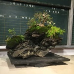 盆栽師 平尾成志さん がアーツ千代田でイベント開催していたので見てきました。