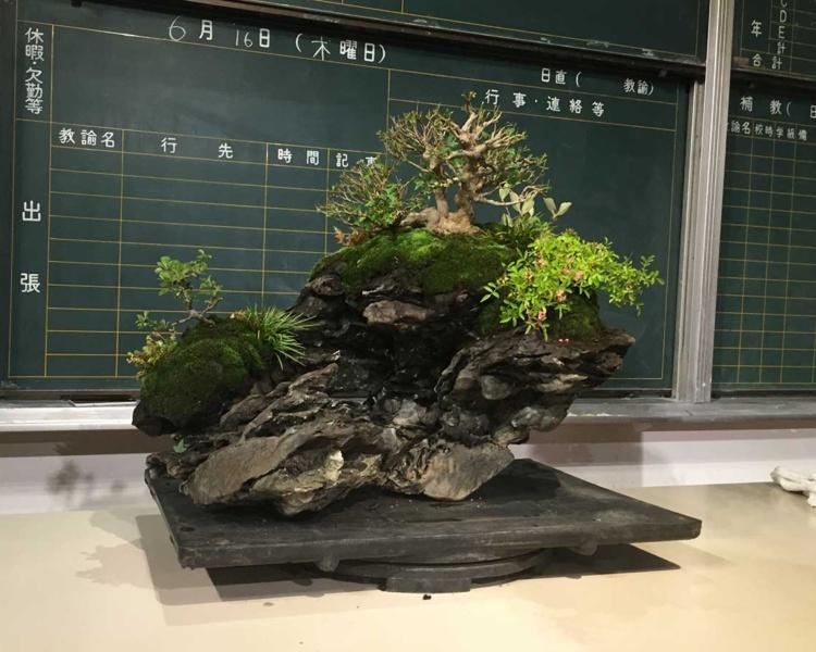 平尾成志さんの作品 盆栽