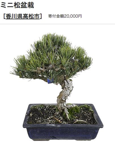 ふるさと納税 香川県高松市 盆栽