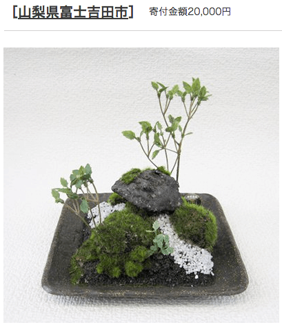 ふるさと納税 山梨県富士吉田市 盆栽