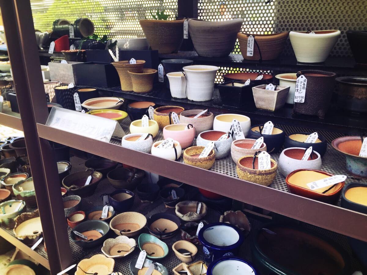 日本橋三越 清香園 オリジナル盆栽鉢