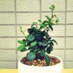 メギが急激に成長。夏も終わりに近付く頃、数日の間に物凄い長さの新枝(茎?)が伸びてきた