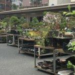 盆栽・盆栽鉢を常設販売している上野グリーンクラブ(東京盆栽倶楽部)に行ってきた。