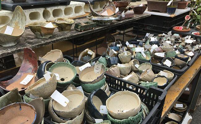 上野グリーンクラブ(東京盆栽倶楽部)盆栽鉢
