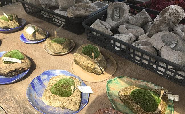 上野グリーンクラブ(東京盆栽倶楽部)盆栽鉢軽石鉢苔つき